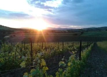 Mazzei bjuder på excellenta viner till grill och kötträtter