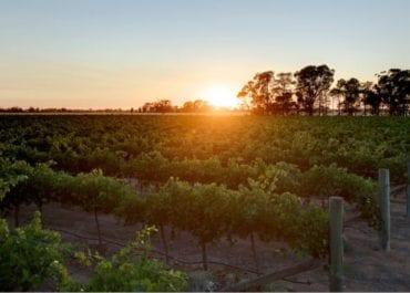 De Bortoli Family Reserve och Regional Classic - Viner för trevliga middagsbjudningar