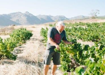 Single vineyard cinsault från Badenhorst