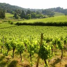 Claude Val konverterar till ekologisk odling i Languedoc