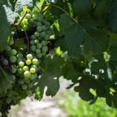 En av medelhavets okända och prisade vinexportörer