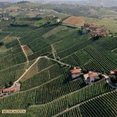 Största lanseringen någonsin från Produttori del Barbaresco