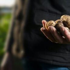Greenfood storsatsar inom lokalproducerat
