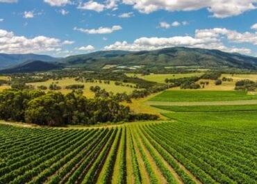 Prisbelönta Giant Steps Applejack Pinot Noir 2019