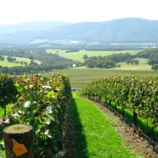 Prisbelönta Giant Steps Applejack Chardonnay 2019