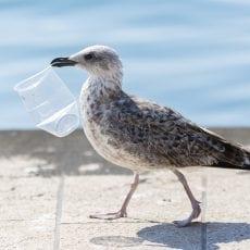 Lidl Sverige finansierar ökad kunskap om cirkulär återvinning av plast