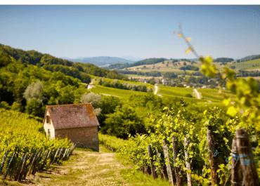 Jura är Frankrikes minsta vinregion