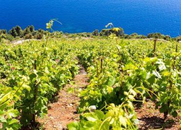 Höstens vin- och matupplevelser i Kroatien